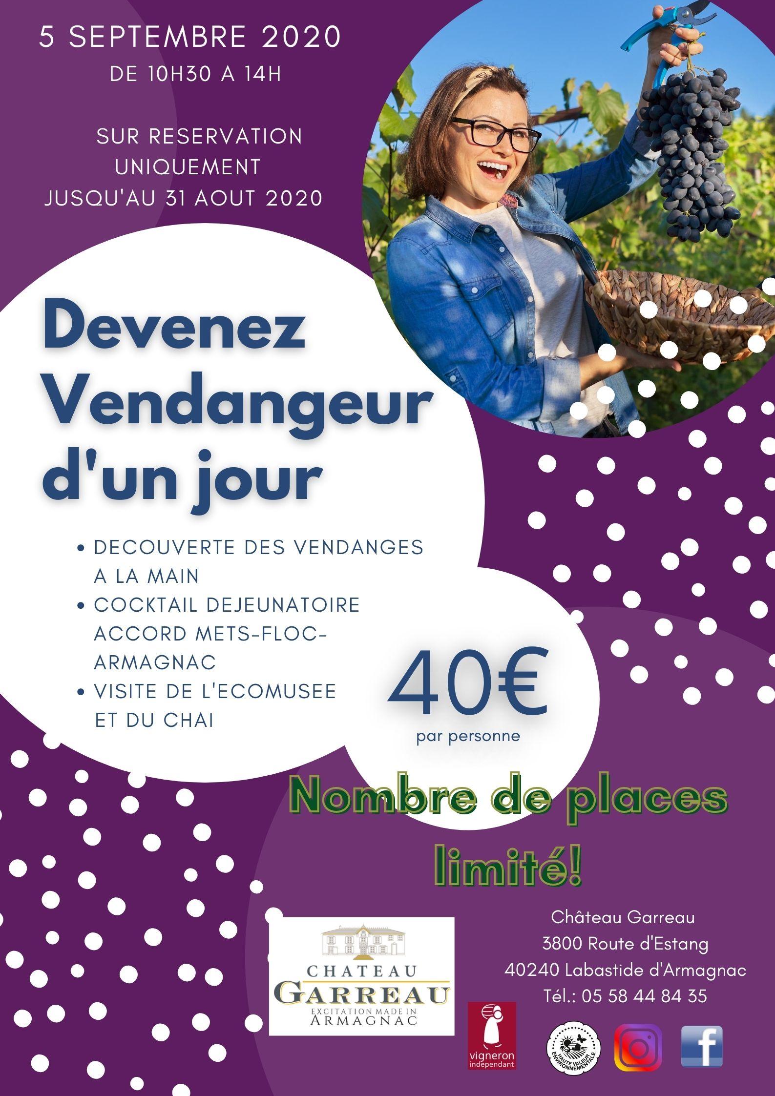 Vendanges, Armagnac, raisin, Labastide d'Armagnac